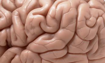 Brian's brain